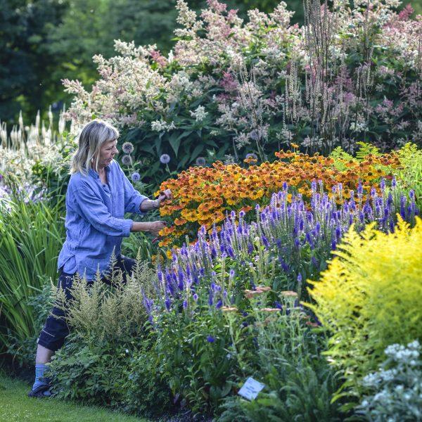 Blomsterprakt i Göteborgs botaniska trädgård. Foto: Jenny Nilsson